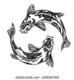 Pair of swimming koi carp. Sketch. Engraving style. Vector illustration