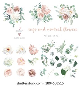 Pale pink camellia, dusty rose, ivory white peony, blush protea, nude pink ranunculus, eucalyptus big vector design set. Wedding neutral sage and beige flowers. All elements are isolated and editable