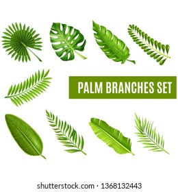 Palm Branches Set Green Leaf