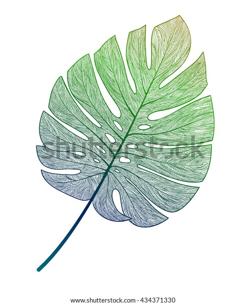 Palm leaf isolated. Vector illustration.