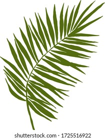 Palm leaf on a white background. Vector graphics.