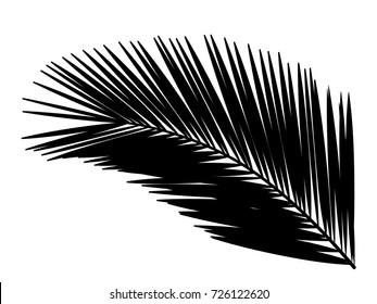 Palm leaf. Silhouette.Vector illustration.
