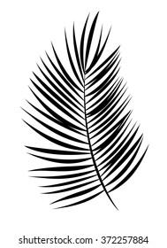 Palm Leaf Vector Background Illustration. EPS10