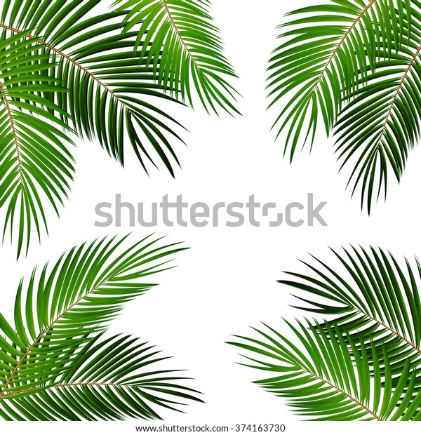 Иллюстрация вектора листьев пальмы EPS10