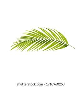 palm leaf vector illustration background