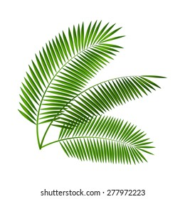 Palm Leaf Vector Illustration EPS10.