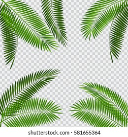Palm Leaf Vector Illustration on Transparent Background EPS10
