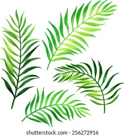 Palm leafs. Watercolor vector illustration.