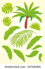 Palm and palm leaves