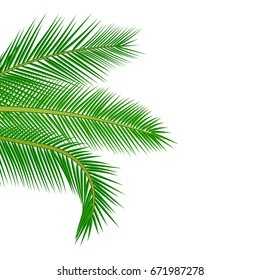 Palm leaves background. Vector exotic palm leaves.