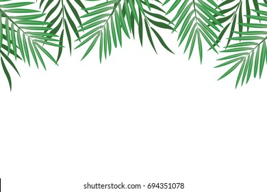 Palm leaves border. Background with exotic leaves for frames and greeting cards. Vector illustration on white background.