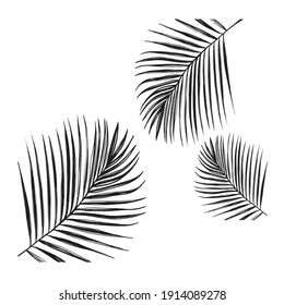 palm leaves composition in black and white