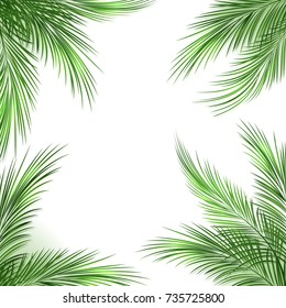 Palm leaves frame. Palmtree green leaf tropical beach border on white background, vector illustration