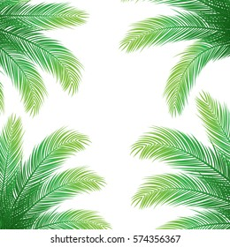 Palm Leaves on White Background | Holiday Vector Design