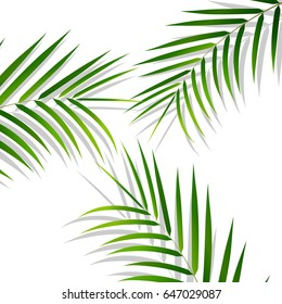 Palm leaves. Palm leaves on white background. Exotic background.
