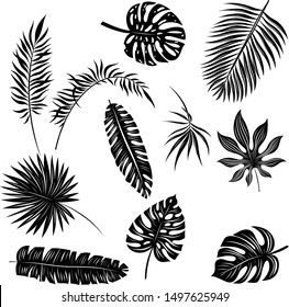 palm leaves set black and white