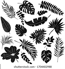 palm leaves set black and white vector illustration