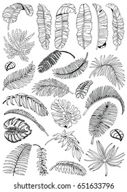 Palm Leaves Set. Exotic Leaf Background. Hand Drawn Black and White illustration.
