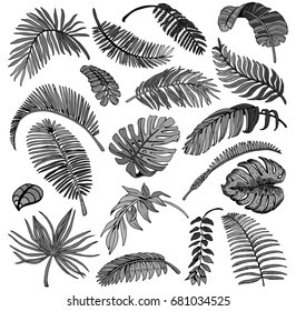 Palm Leaves Set. Exotic Leaf Background. Hand Drawn Black and White illustration.