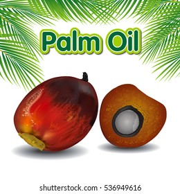 Palm oil fruits with palm leaves. Vector illustration