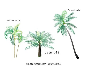 the yellow palm