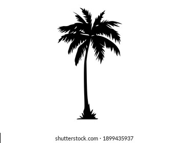 palm tree with black color