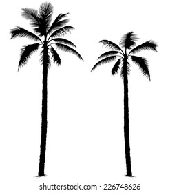 Palm Tree - Black Silhouettes, Vector