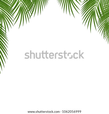 Palm Tree Frame Green Palm Leaves Stock Vector Royalty Free