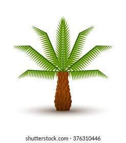 Palm tree icon isolated on white background
