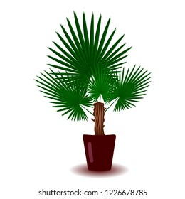 Palm tree indoor houseplant in brown clay pot. Element for home decoration interior. Botanical floral flat style vector illustration on white background