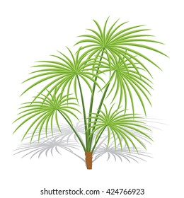 Palm tree isolated on white background with shadow. Vector illustration.