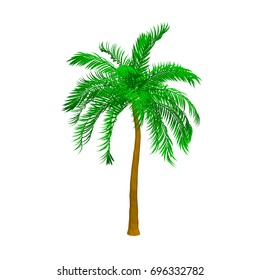 Palm tree. Isolated on white background. 3d Vector illustration.