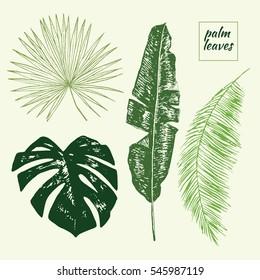 palm tree leaves set