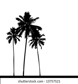 Palm tree silhouette black