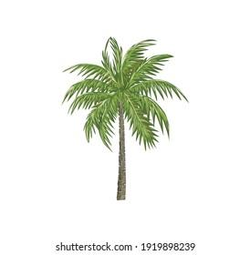 palm tree vector illustration, coconut trees hand drawing art