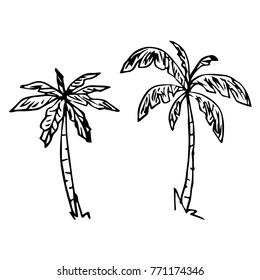 Palm tree vector illustration. Doodle style. Design, print, decor, textile, paper