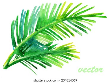 Palm tree watercolor original painting. Watercolor Vector.