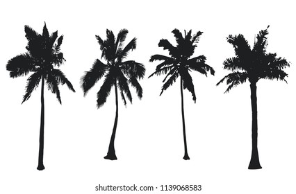 Palm trees collection. Set black silhouettes isolated on a white background. Vector illustration