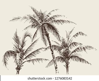 Palm trees foliage, tree crown drawing