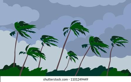 palm trees hurricane storm landscape