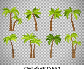 Palm trees isolated on transparent background. Beautiful vector palma tree set vector illustration