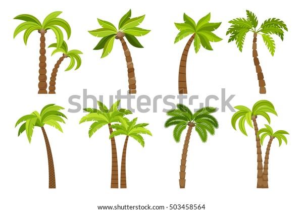 Пальмы изолированы на белом фоне. Красивая вектро пальма дерево набор векторная иллюстрация