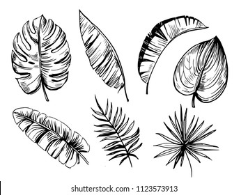 Palm trees. Outline. Vector set