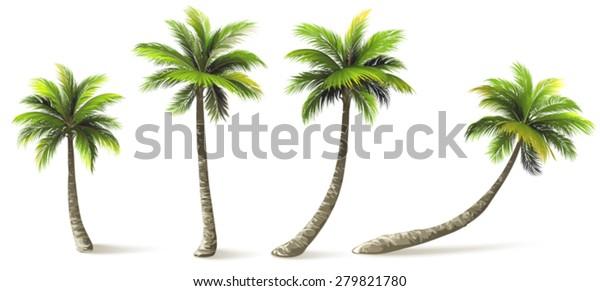 Пальмы с тенью изолированы на белом. Векторная иллюстрация