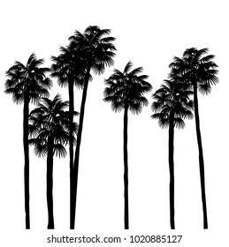 Palm trees silhouettes isolated on a white background. Design element for t-shirt prints, textile, patterns. Tropical nature element. Vector EPS10.