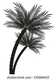 Palm trees silhouettes isolated on white