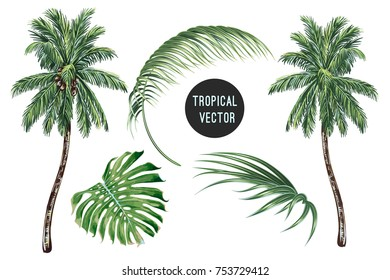 Palm trees, tropical leaves, monstera leaf vector set isolated on white background. Vector collection of botanical illustrations, palms, floral elements