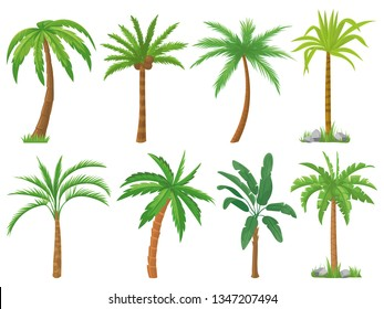 Palm trees. Tropical tree green leaves, beach palms and retro california greenery. Miami trees, coconut palm or exotic hawaii forest green tree. Isolated vector symbols set