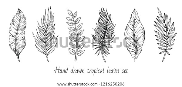 Palm Tropical Leaf Set Hand Drawn Stock Vector Royalty Free 1216250206 These tropical flowers create a beautiful base for the image of the pineapple. https www shutterstock com image vector palm tropical leaf set hand drawn 1216250206