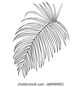Palm. Tropical leaves. Vector illustration